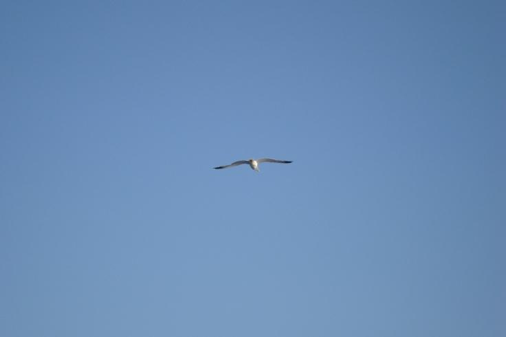 Volar2