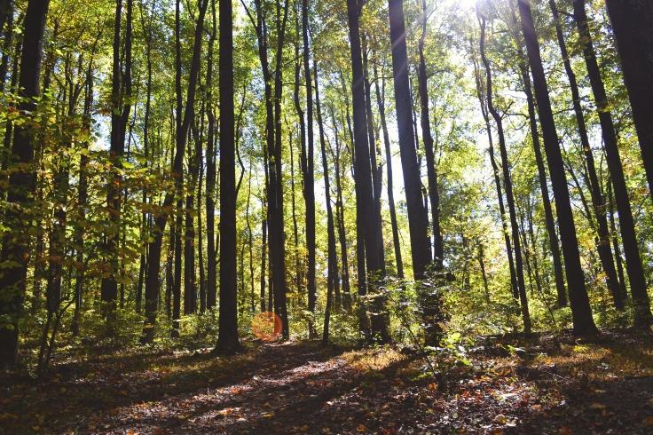 in-forest-picjumbo-com